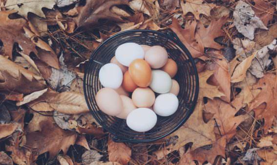 Eggs for eyes